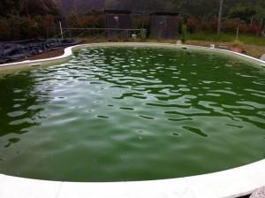 IMPEC Piscine e Sali - pulizia piscine